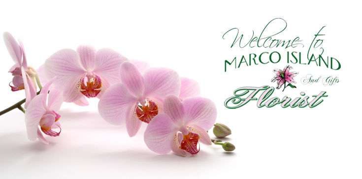 Welcome to Marco Island Florist's online showroom where you receive points with every online purchase!